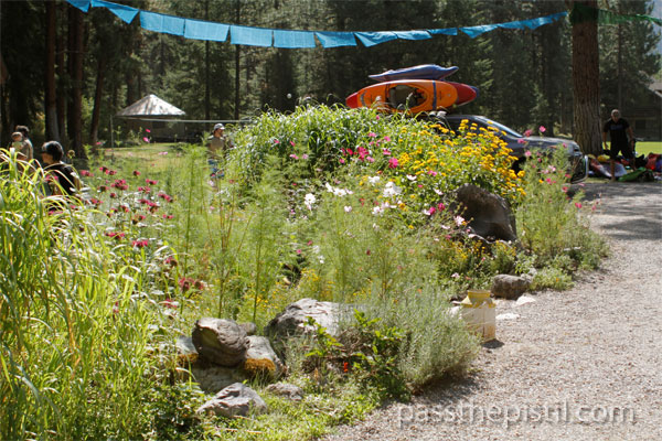 Rain Garden at Tarkio, Missoula, MT. Planted with cosmos, coreopsis, bee balm and Miscanthus gigantea.