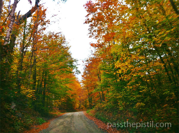 10 Benefits of Trees & More: New England Fall Trees