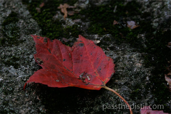 10 Benefits of Trees & More: New England Fall Leaves