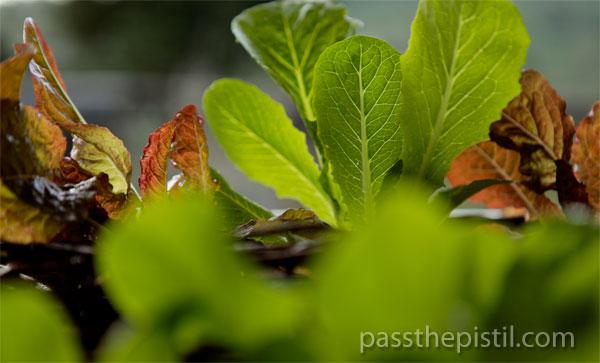 10 Tips for Starting a Garden