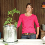 Trash Can Tomatoes: How to Plant & Grow Tomatoes