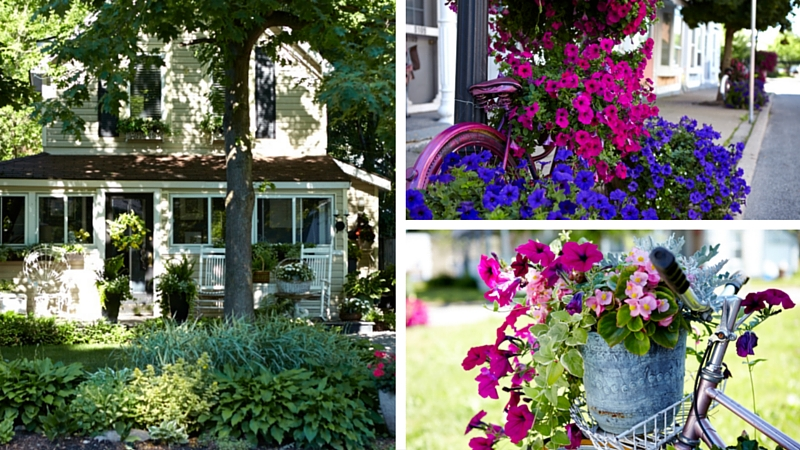 GROWING FLOWERS WITH SPIN: UPCYCLED BICYCLE GARDENS