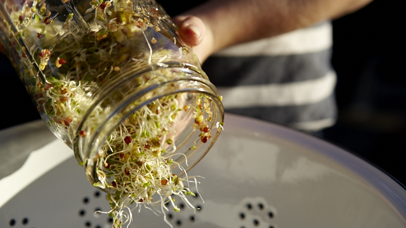 How to Grow Sprouts with DIY Sprouting Jars