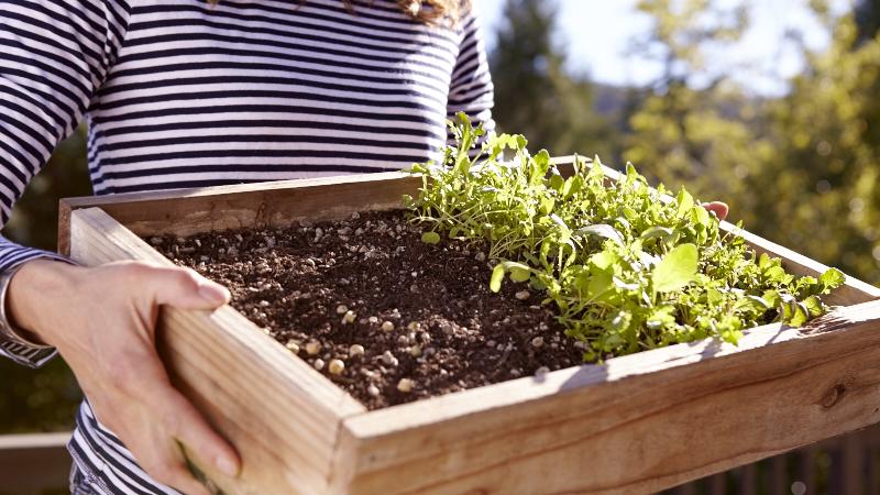 Grow Your Own Micro-Greens | DIY Gardening