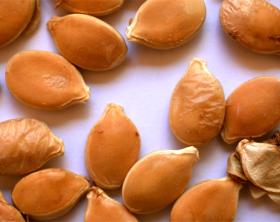 Seeds 101