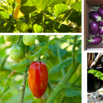 12 Edible Plants That Give More Than They Need