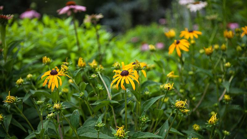 3 Steps Toward a Better Pollinator Garden