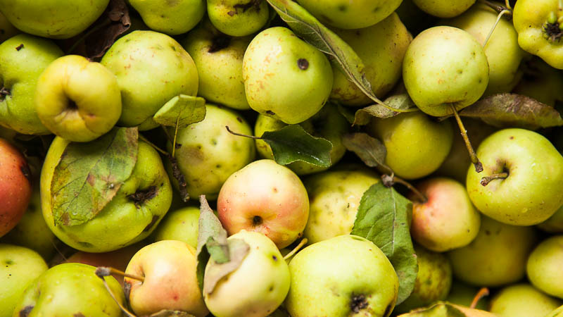 Cider Making with City Fruit