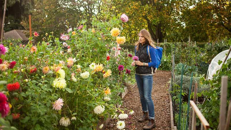 Pacific Northwest Flower Revival: Dahlias & Emily Murphy. Pass the Pistil.