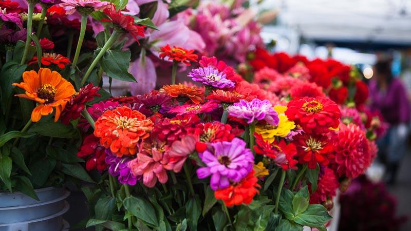 Flower Revival: Zinnias and Dahlias West Seattle. Pass the Pistil & Emily Murphy.
