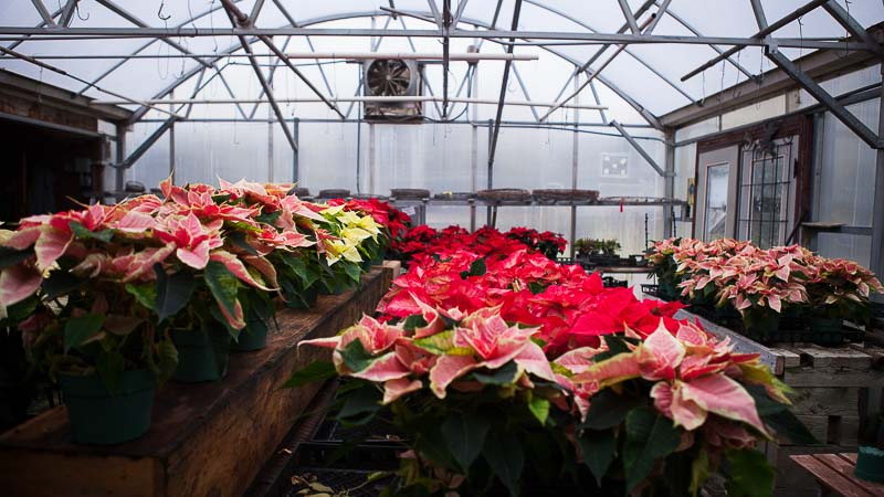 A Local Nursery: Shelburne Vermont