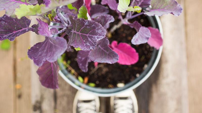 Kitchen Garden: Are Galvanized Planters Safe?