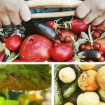 How to Grow More Vegetables with Less Space
