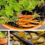 Container Garden Carrots From Seed To Plate