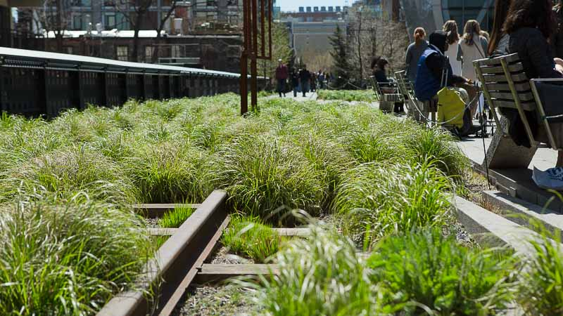 Garden Visit: The High Line, NYC