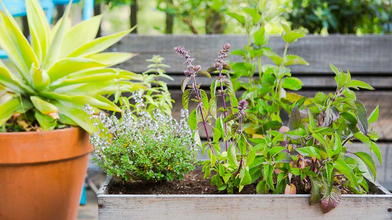 DIY Wine Box Herb Garden