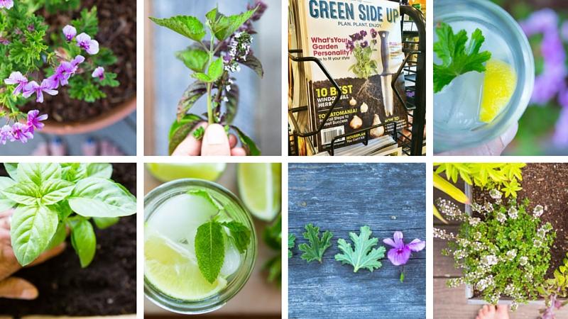 Summer Harvesting Tips + Green Side Up Giveaway