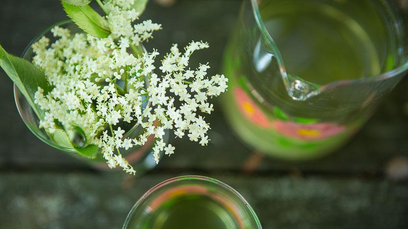 Summer Forage: How to Make Elder Flower Cordial