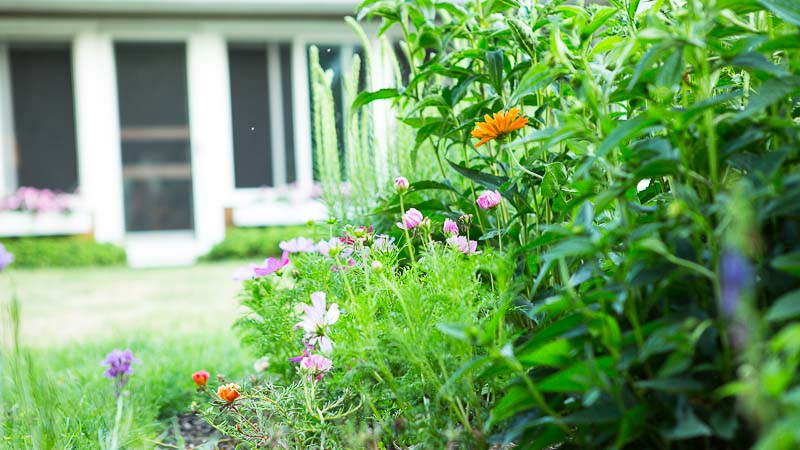 Grow What You Love: Lake Erie Summer Garden