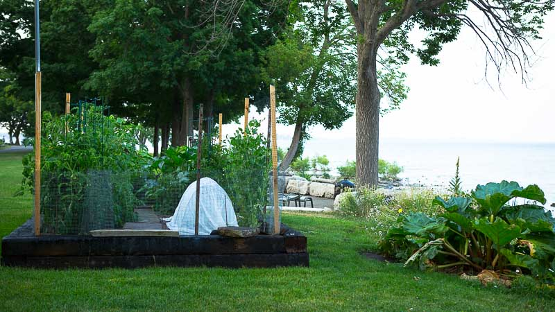 Grow What You Love: Lake Erie Summer Garden