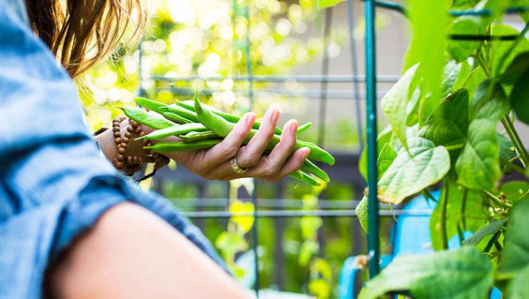 September Garden Checklist