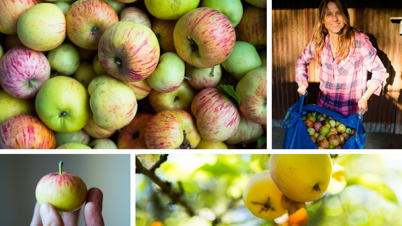 Community Squeeze: 1st Annual Community Cider Pressing
