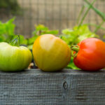 Green Tomatoes: How to Ripen & When to Eat