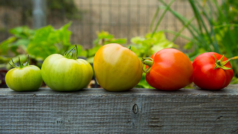 green tomatoes or bust how to ripen when to eat pass the pistil. Black Bedroom Furniture Sets. Home Design Ideas