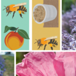 Make Your Own Bee Friendly Garden