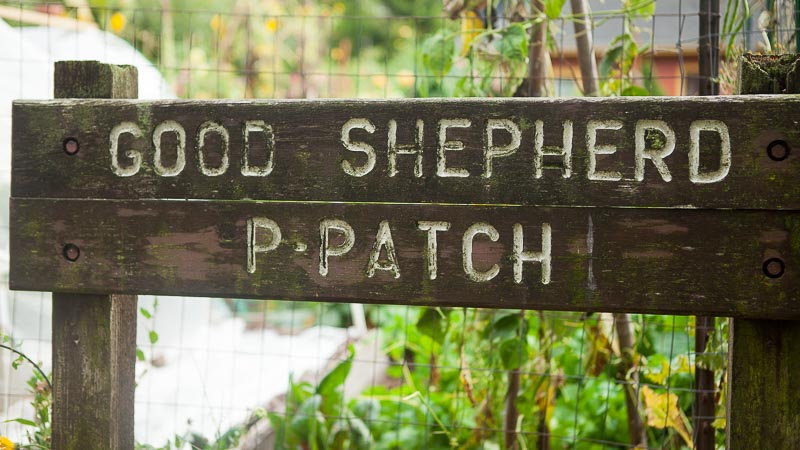 5 Garden Design Ideas Gleaned From the Good Shepherd P-Patch