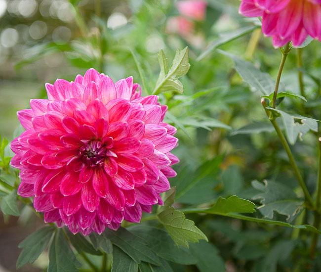 5 Garden Design Ideas Gleaned From the Good Shepherd P-Patch