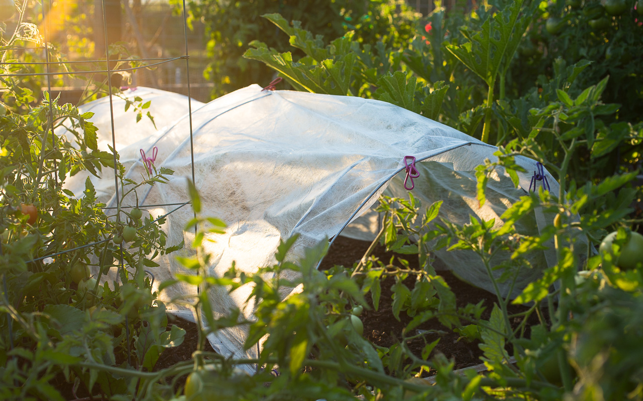 a scant few millimeters of row cover fabric could be your secret to a thriving successful garden especially when the mercury drops - Garden Row Covers